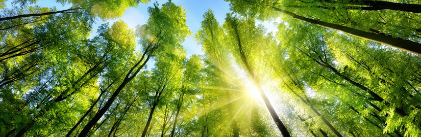 598057526_Enchanting-sunshine-on-green-treetops.jpg